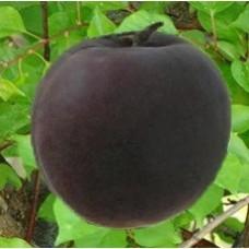 Мелитопольский черный