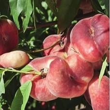Персик Никитский плоский (инжирный)